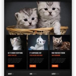 Katzen Webseite