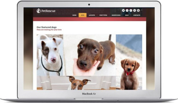 WordPress Animal and Shelter Theme